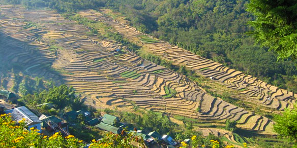 Nagaland Terraced Paddy Farm Khonoma, India