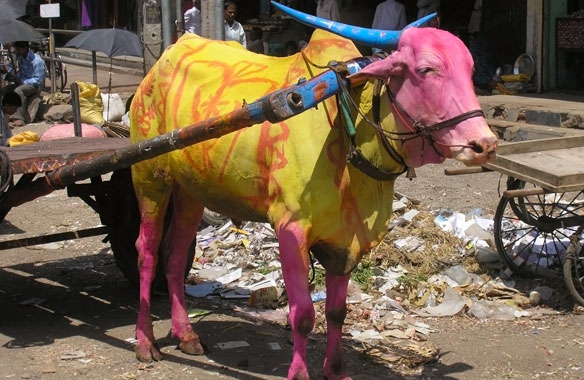 Painted Hindu Cow, India